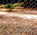 Siatka ogrodzeniowa izola oczko hex  2,5 cm, 50mb ocynkowana (na woliery)