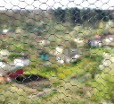 Go��bnik - siatka z oczkiem sze�ciok�tnym oczko 1,6cm, 25mb powlekana