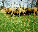 Siatka ogrodzenia elektrycznego dla owiec i k�z wys. 90cm d�. 50m