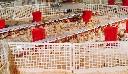 Panel separacyjny do budowy kręgów, sektorów odchowalnikowych w kurnikach - zdjecie 3