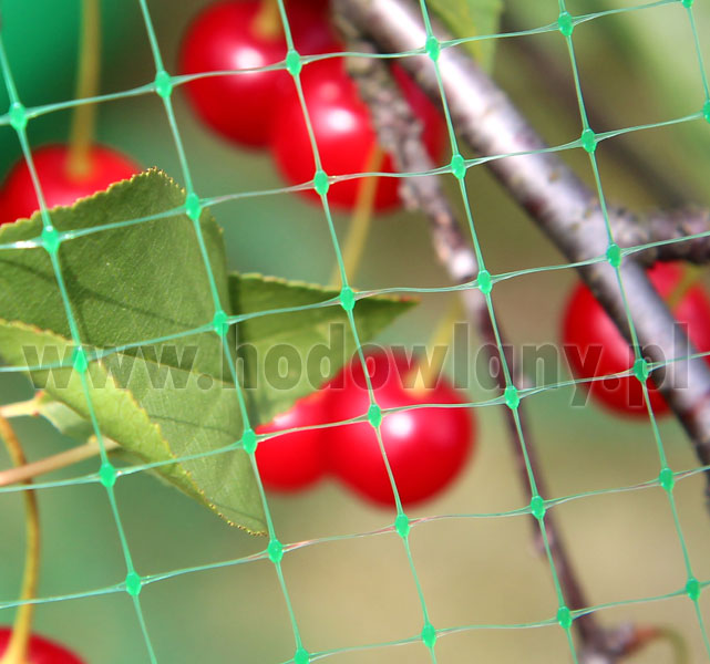 Siatka do ochrony czereśni i wiśni przed szpakami 4,8 x 5 m - zdjecie 1