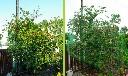 Siatka osłonowa przeciw ptakom 4,8 m x 200 m - zdjecie 6