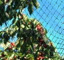 Siatka dziana na ptaki do ochrony drzew i krzewów owocowych 15 x 15 m - zdjecie 2
