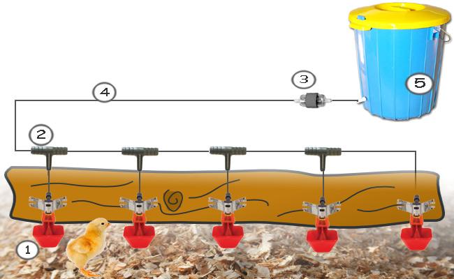 Kompletny zestaw pojenia dla drobiu miniDRINK
