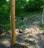 Pal drewniany fi 8 cm do pastuchów na słupki narożne i bramowe h-200 cm - zdjecie 2