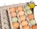 Taca z silnikiem do obracania jaj 42 jaja kurze - zdjecie 2