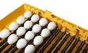 Inkubator do jaj Ovation 56 Zoologica dla ptaków egzotycznych - zdjecie 3