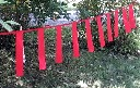 Fladry czerwone chorągiewki do odstraszania wilków i zwierzyny leśnej  3F - 1 mb - zdjecie 2