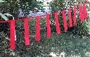 Fladry girlandy czerwone chorągiewki do odstraszania wilków i zwierzyny leśnej  5F - 1 mb - zdjecie 2