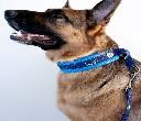 Zestaw obroża + smycz z podszyciem siateczkowym dla średniego psa  ROZMIAR M - zdjecie 4
