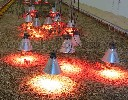 Promiennikowa lampa  ze szkła zbrojonego o mocy 175 W - czerwona - zdjecie 3