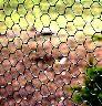 Siatka do budowy wolier z oczkiem sześciokątnym oczko 2 cm, 25mb powlekana
