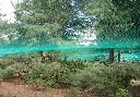 Siatka polietylenowa na pokrycia wierzchnie wolier oczko 6 x 6 cm - na wymiar - zielona - zdjecie 2