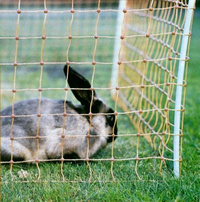 Siatka ogrodzenia elektrycznego dla królików gęsi kaczek wys. 60cm dł. 50 m pomarańczowa - zdjecie 1