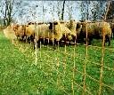 Siatka ogrodzenia elektrycznego dla owiec i kóz wys. 90cm dł. 50m - pomarańczowa