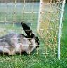 Siatka ogrodzenia elektrycznego dla królików gęsi kaczek wys. 60cm dł. 50 m pomarańczowa