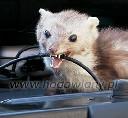 Odstraszacz ultradźwiękowy domowy na kuny, myszy, szczury komplet z zasilaczem - zdjecie 2